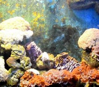 Phuket Aquarium (HD)