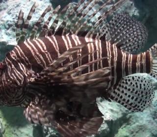 Phuket Sea Aquarium / Acuario de Phuket / Aquarium de la mer