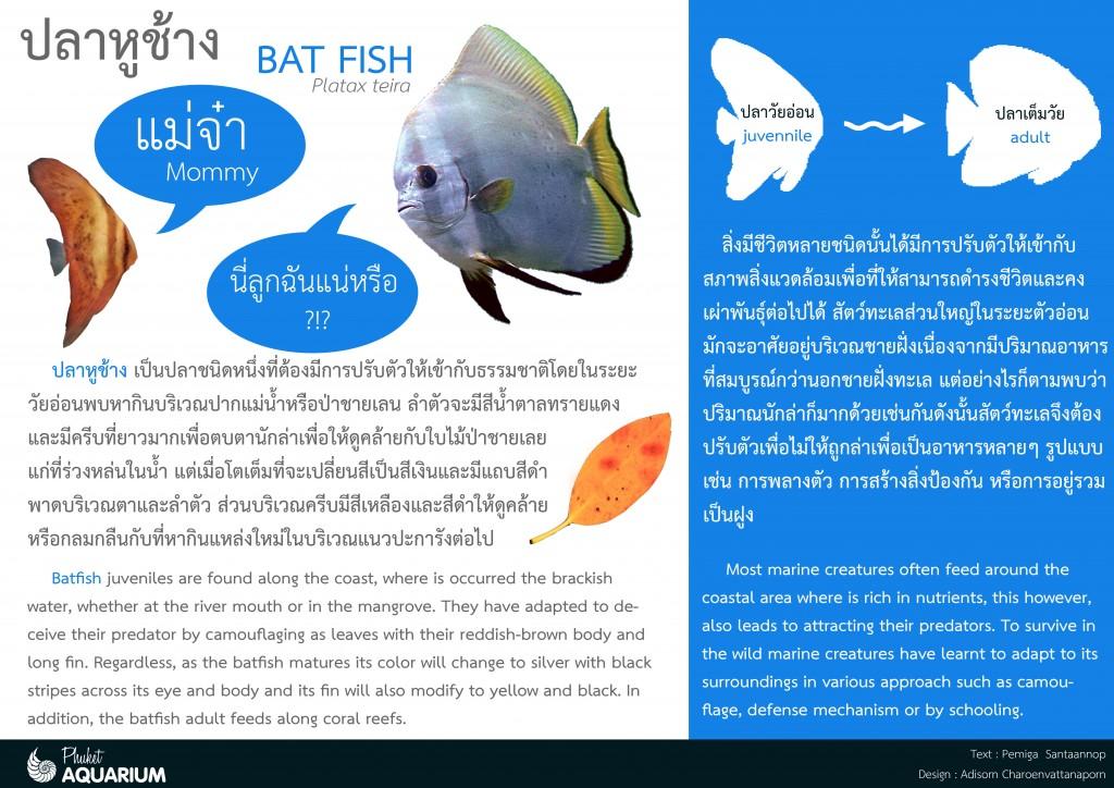 ปลาใบหูช้าง_การปรับตัวA3